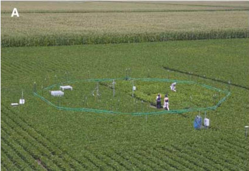 Tilraun í gangi þar sem CO2 var aukið á ákveðnum bletti (Lang o.fl 2006).