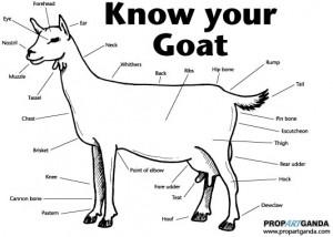 Vincent De Roeck goat