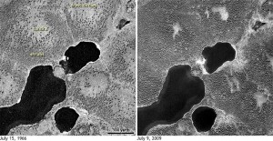Svarthvít mynd tekin með Gambit gervihnettinum árið 1966 (vinstri) sýnir sífrera með stökum runnum, en mynd tekin árið 2009 (hægri) sýnir mun þéttvaxnari runna.Myndir frá U.S. Geological Survey.